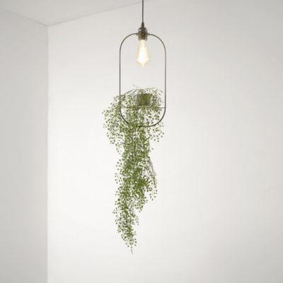Aeon Hanging Garden Oval Pendant